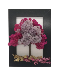 Aranjament licheni, cod ARL01
