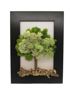 Aranjament licheni, cod ARL02