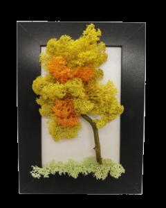 Aranjament licheni, cod ARL04