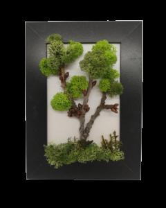 Aranjament licheni, cod ARL05