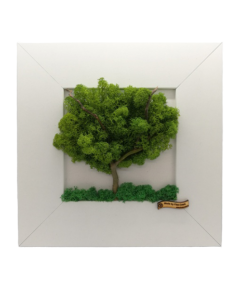 Aranjament licheni, cod ARL12