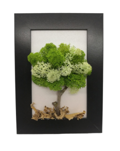 Aranjament licheni, cod ARL13