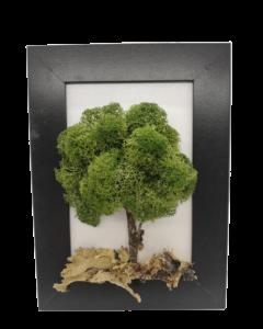 Aranjament licheni, cod ARL14