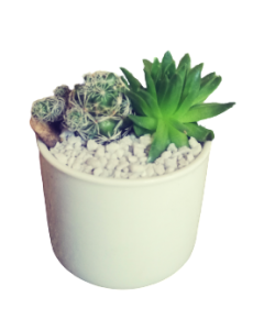 Aranjament plante suculente, cod APS04