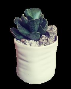 Aranjament plante suculente, cod APS05