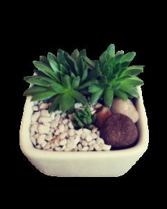 Aranjament plante suculente, cod APS07