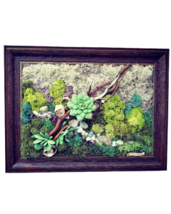 Aranjament licheni, cod ARL11