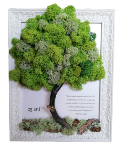 Aranjament licheni, cod ARL23