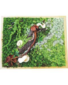 Aranjament licheni, cod ARL26