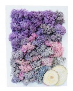 Aranjament licheni, cod ARL20