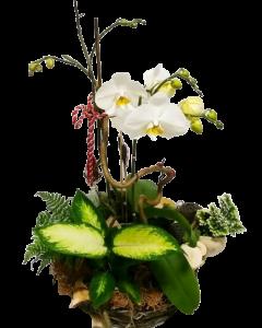 Aranjament floral, cod MAR009
